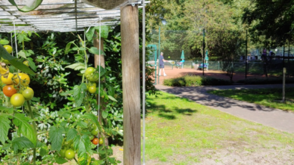 Read more about the article Update zu unserem Naturschutz-Projekt